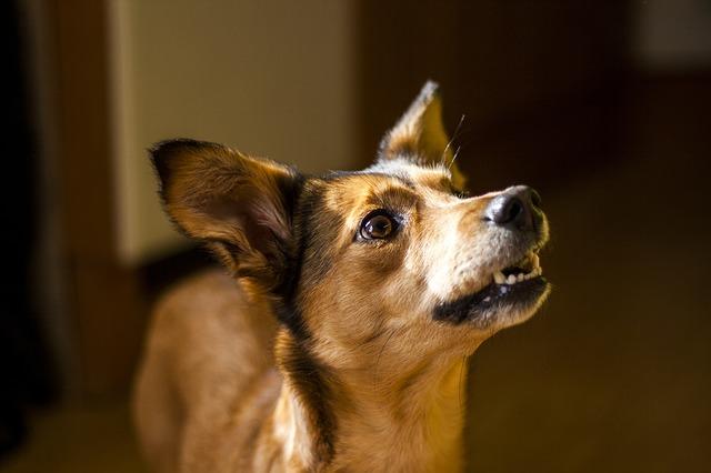 entrenar a tu perro en casa