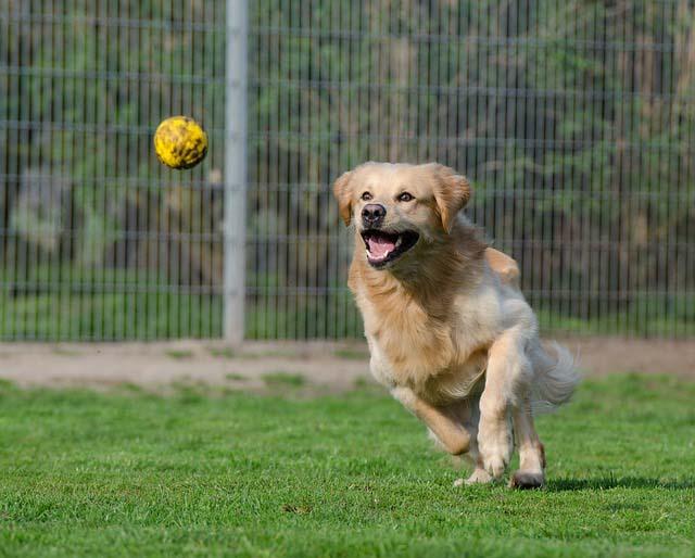 juego perro
