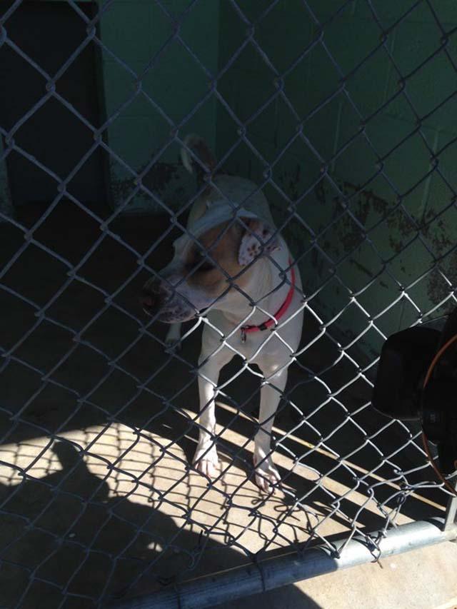Alguien conoce esta perra que mamaacute guevo bien rico - 5 1