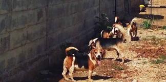 perros liberados de un laboratorio