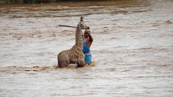 salvan jirafa de ahogarse