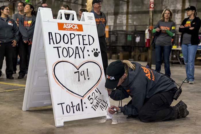 Adopción masiva