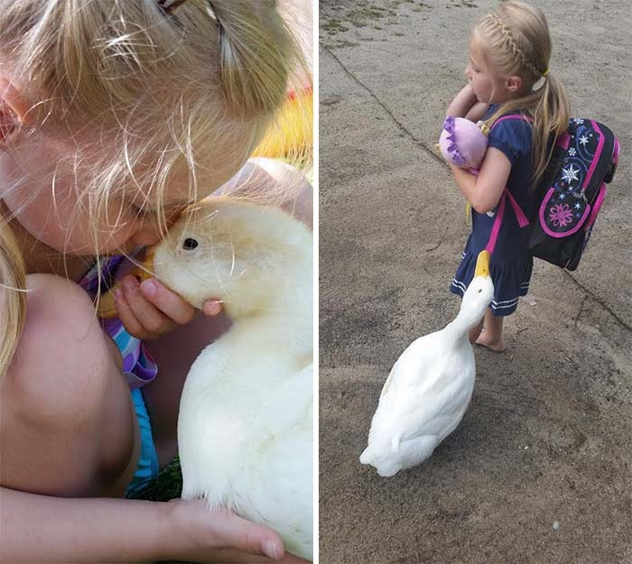 Amistad entre niña y pato