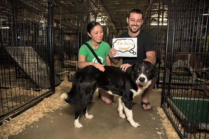 Animales adoptados