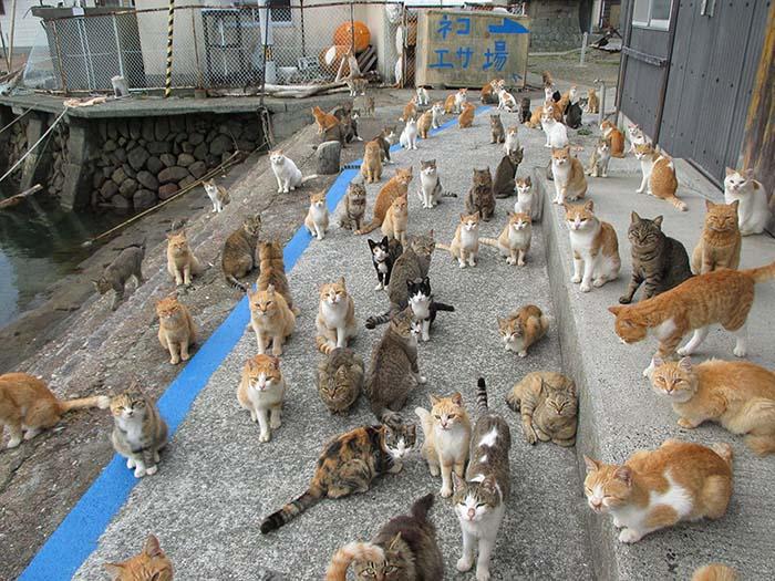 Aoshima, Isla de los gatos