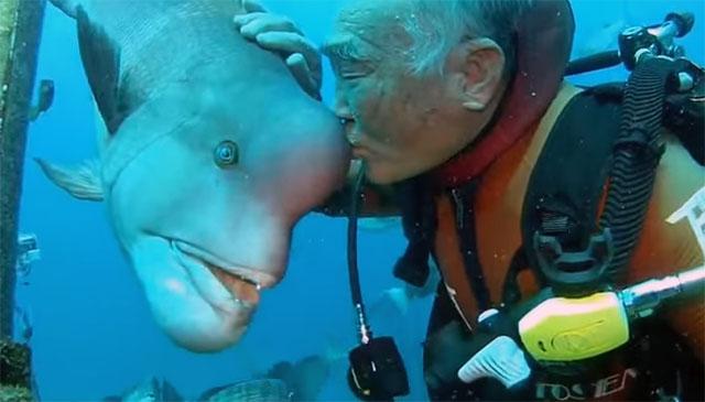 Buzo es amigo de un pez