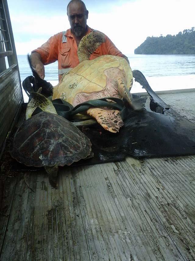 Compra tortugas y las devuelve al mar