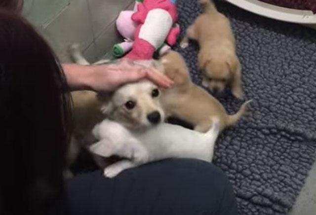 Cora y sus cachorros