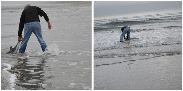 Devolvió el tiburón al mar