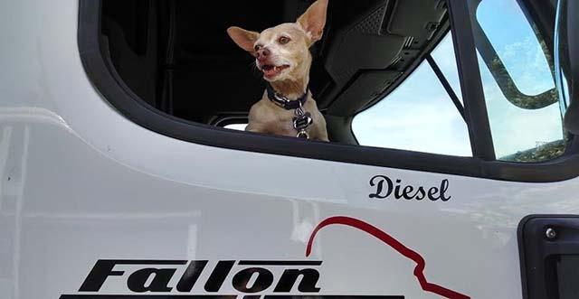 Diesel es feliz