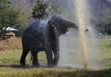Elefante rompe el sistema de rociadores