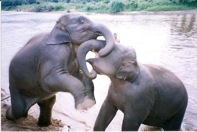 Elefantes en el río