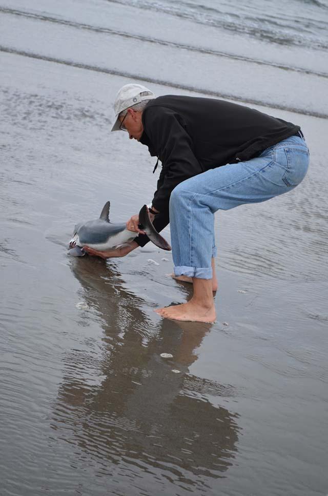 Encontró un tiburón