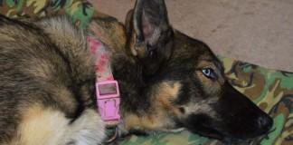Encuentran viva a una perra después de caer al mar hace un mes