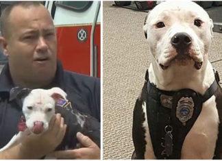 Este bombero salvó a un pit bull en un incendio