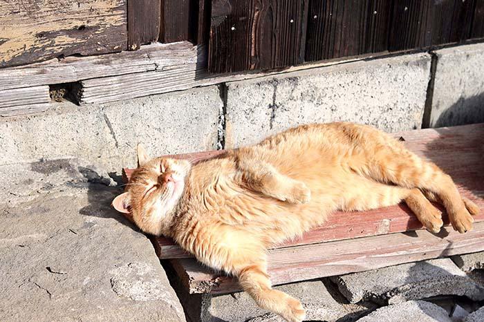 Gato acostado en Aoshima