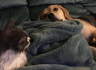 Gato no se llevaría bien con perros