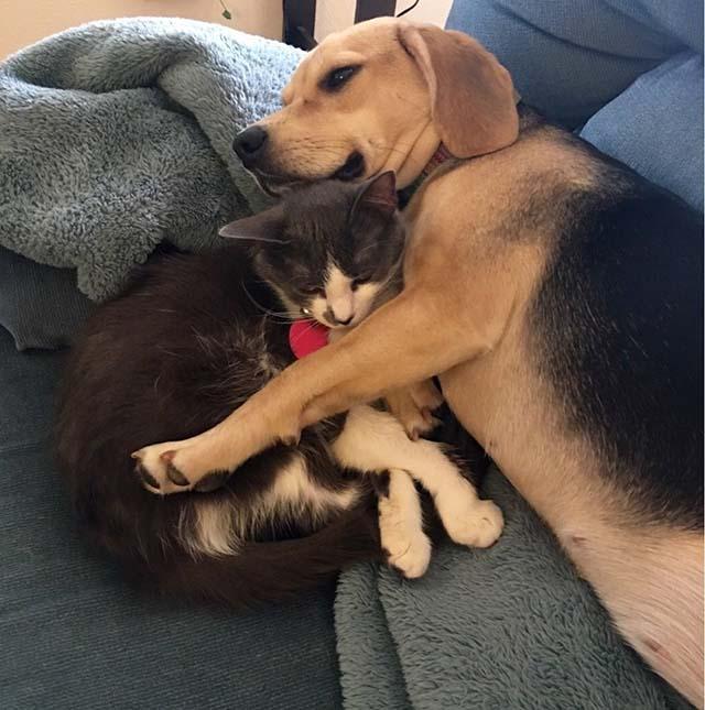 Gato y perro amigos