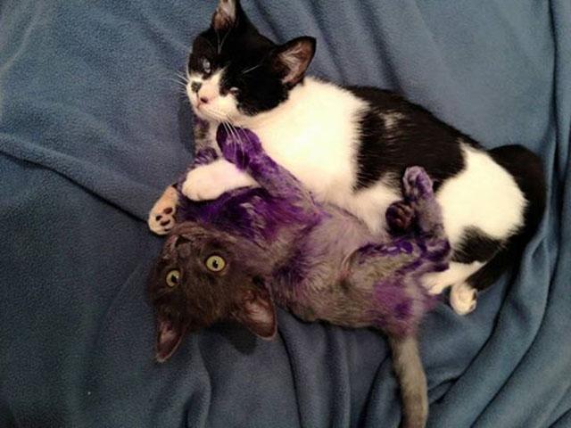 Gatos amistad