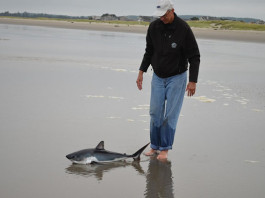 Holbre salva a un tiburón