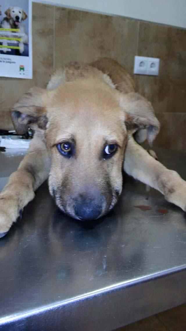 Igor, un perro usado para alimentar a otro