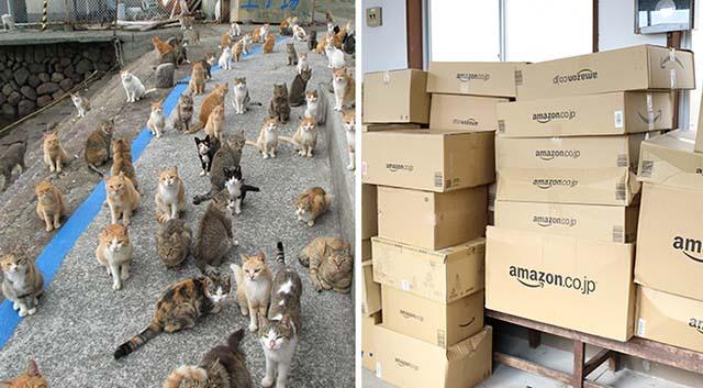 Isla de los gatos en Japón pidio ayuda por Internet