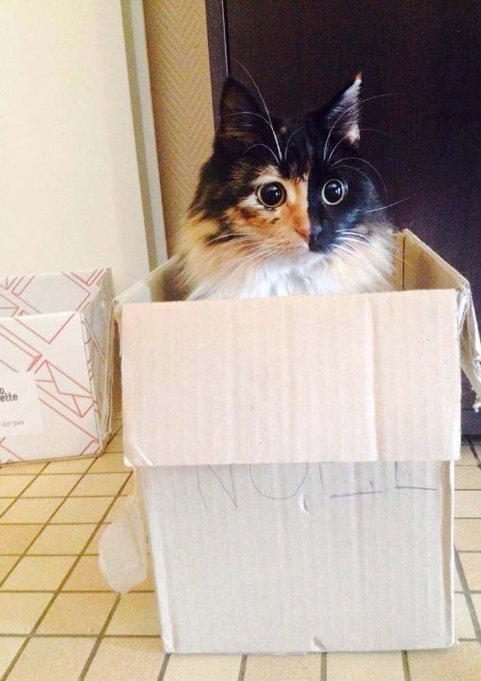 Jasmine, una gata ciega
