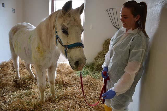 Lily caballo maltratado