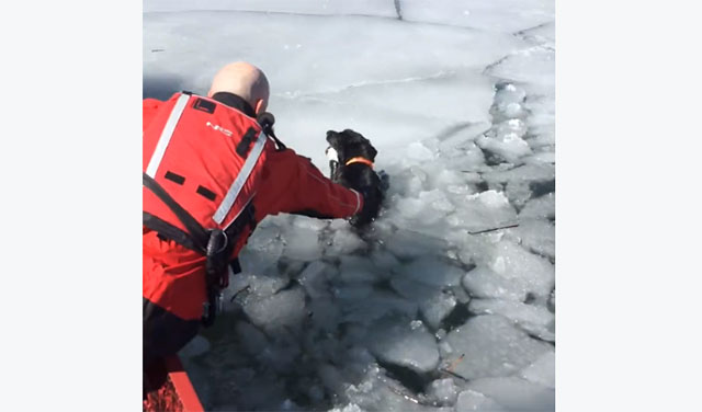 Perra esperó sola en el hielo antes de su rescate