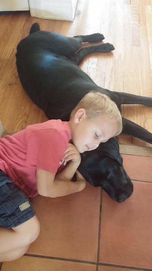 Perro cuida de niño con diabetes
