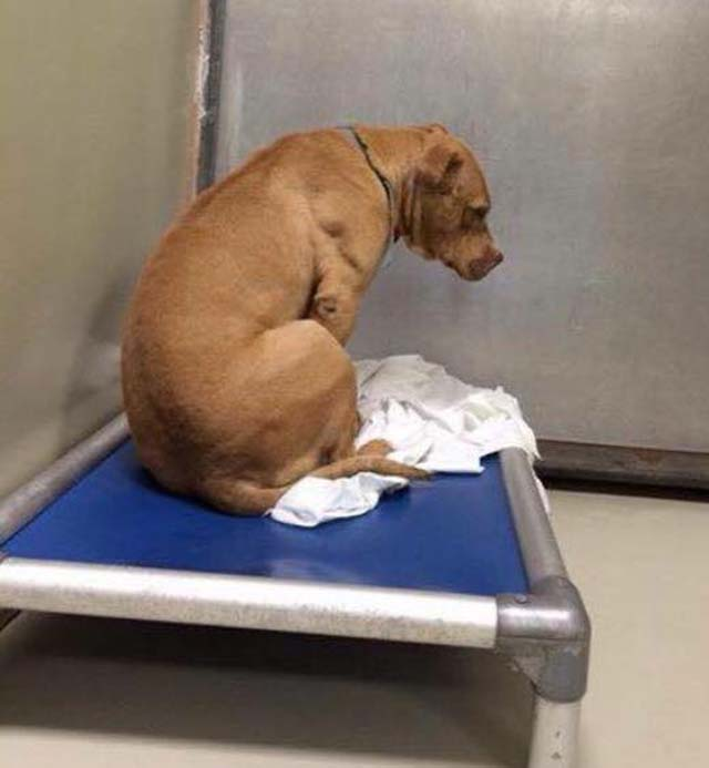 Perro decepcionado porque no ha sido adoptado