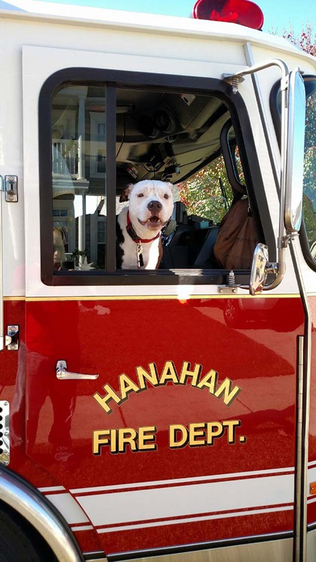 Perro en camión de bomberos