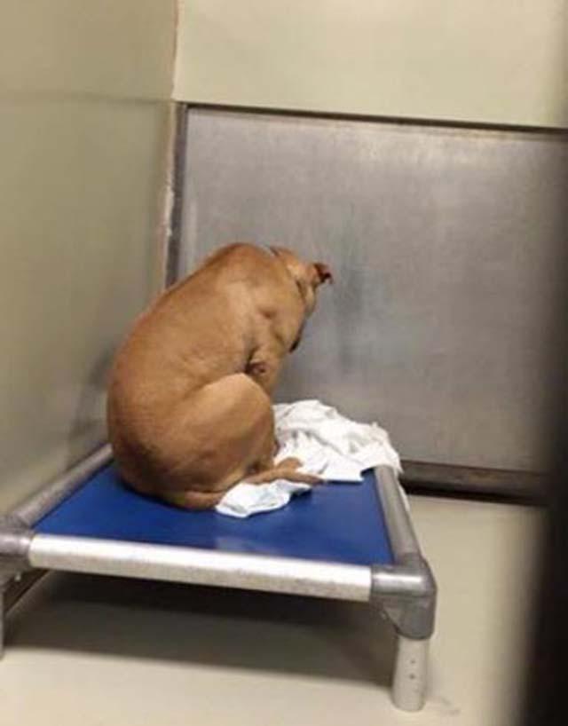 Cane è stato restituito al rifugio