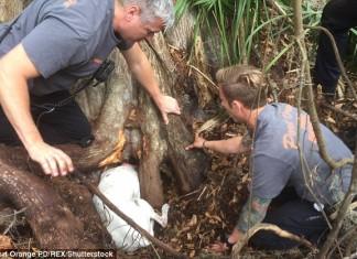 Perro quedó atrapado fue rescatado