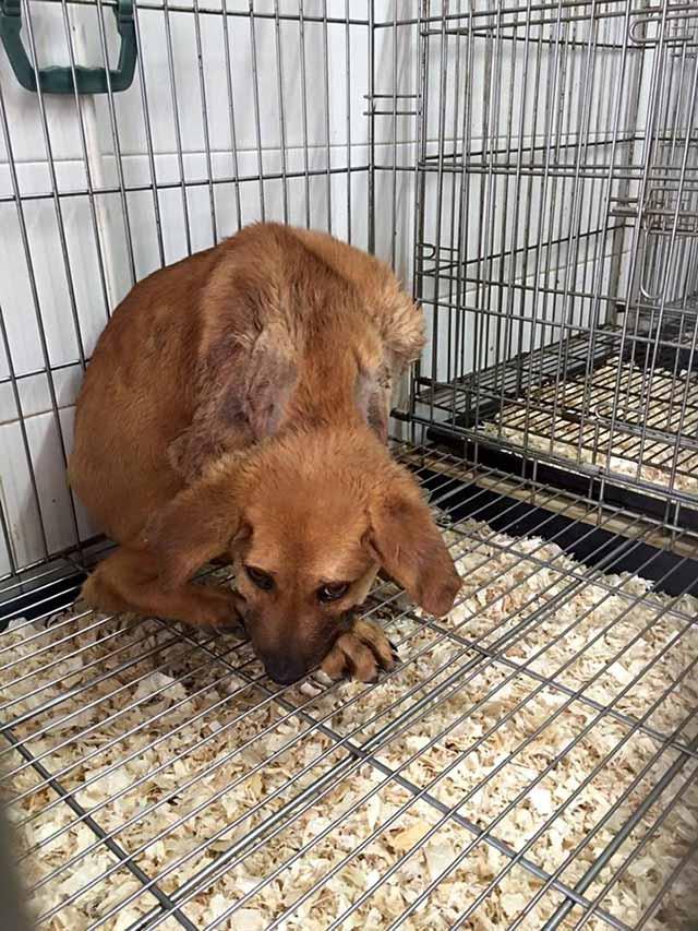 Perro usado para alimentar a otro perro