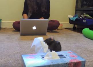 Ratas inteligentes