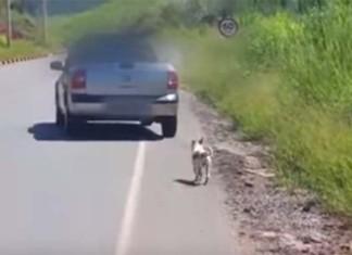 Rescata a un perro abandonado