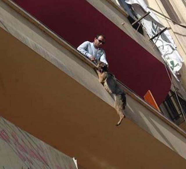 Rescatan perra encadenada que se lanzó de un balcón en Egipto