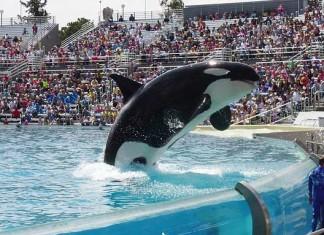 SeaWorld dejará de criar orcas