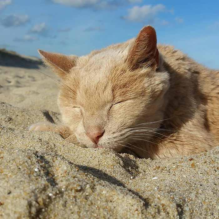 Tigger es un gato de 21 años