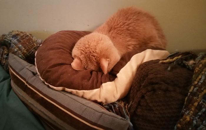 Tigger está muy enfermo pero su familia lo ama
