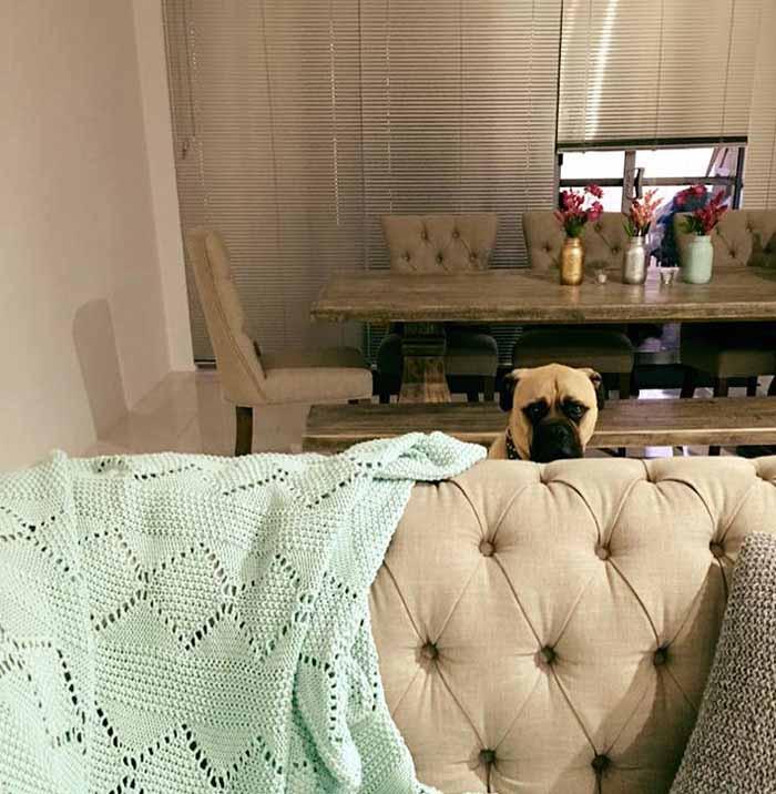 Cyrus el perro con mirada inquietante