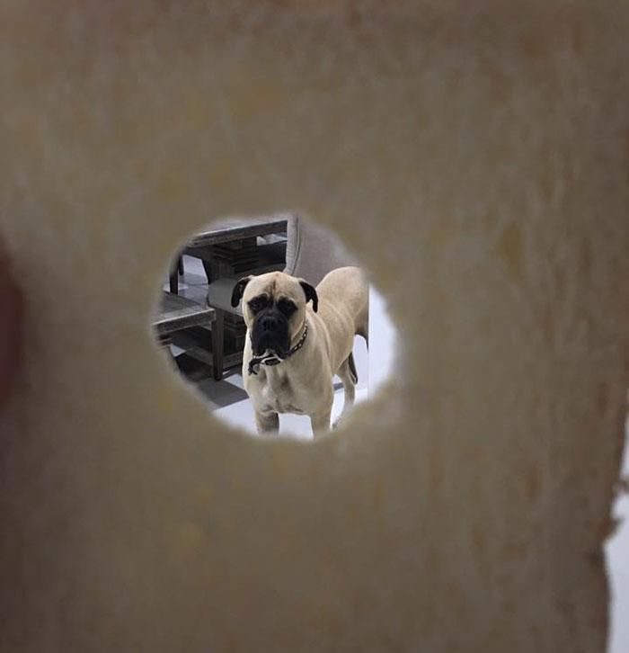 Cyrus el perro espía