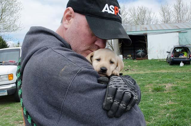 Decenas de perros rescatados de una fábrica de cachorros