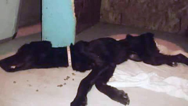 Dejó morir a su perra de hambre