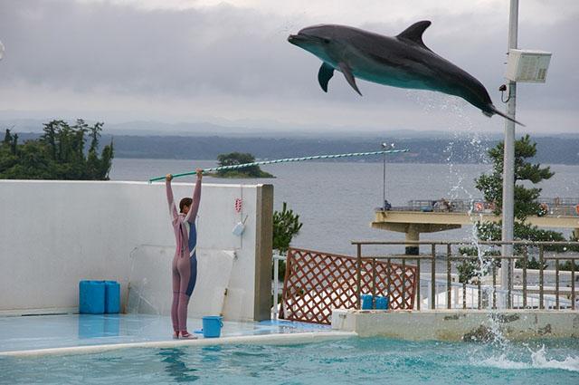 Delfín realizando trucos
