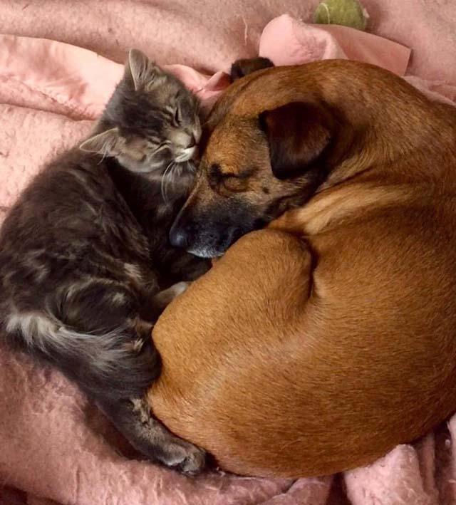 Gatito y perro