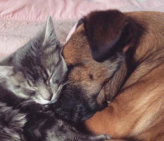 Gato cuida de perro epiléptico