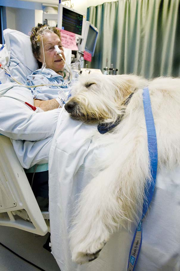 Hospital de canada permite entrada de mascotas