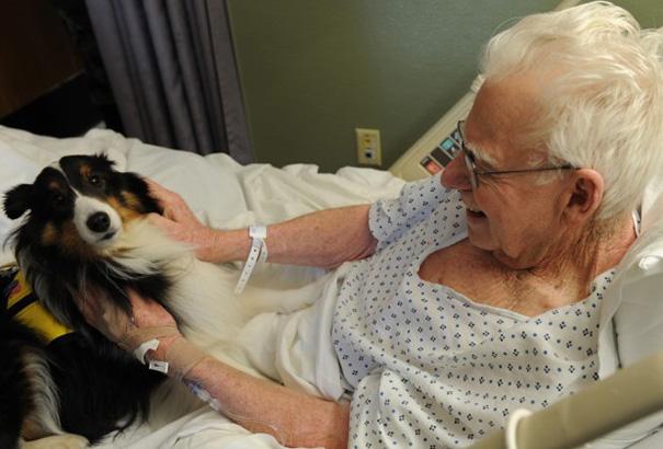 Hospital permite ingreso de mascotas